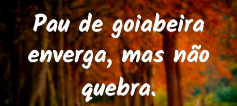 """imagem de provérbio popular """"pau de goiabeira enverga, mas não quebra"""""""